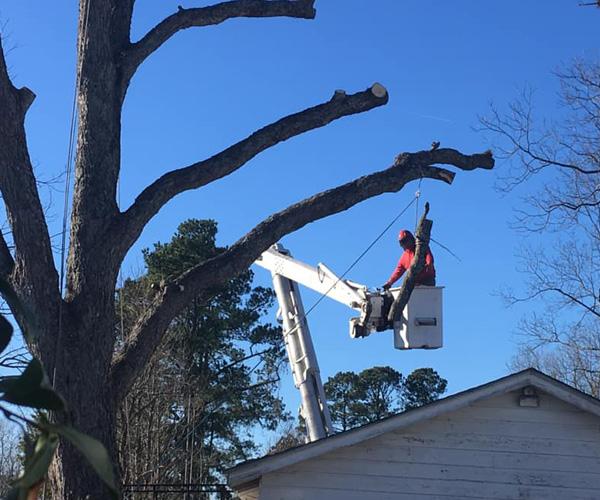 Professional Tree Services Hampstead NC