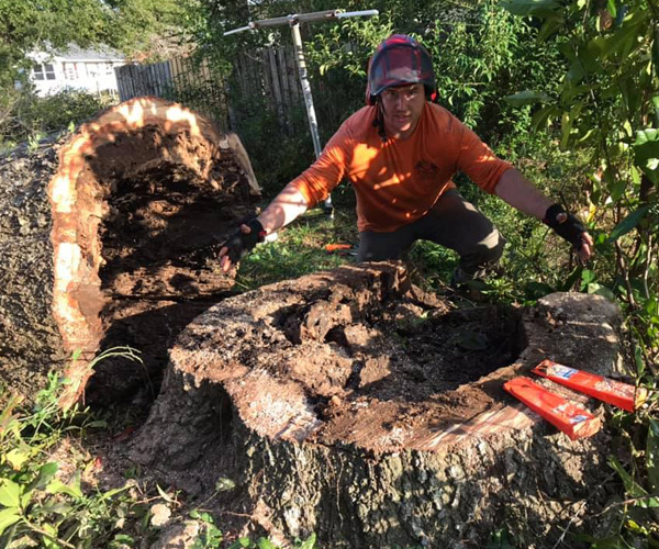 Professional Tree Services Richlands NC