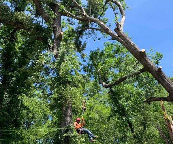 Professional Tree Services Swansboro NC