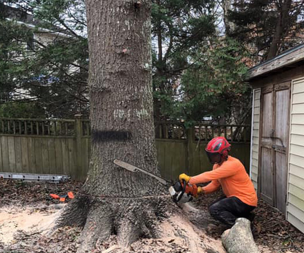 The Complete Tree Removal Guide for Homeowners
