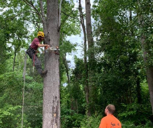 Tree Service Jacksonville NC - Godhan