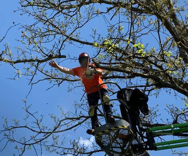 Topsail Tree Experts