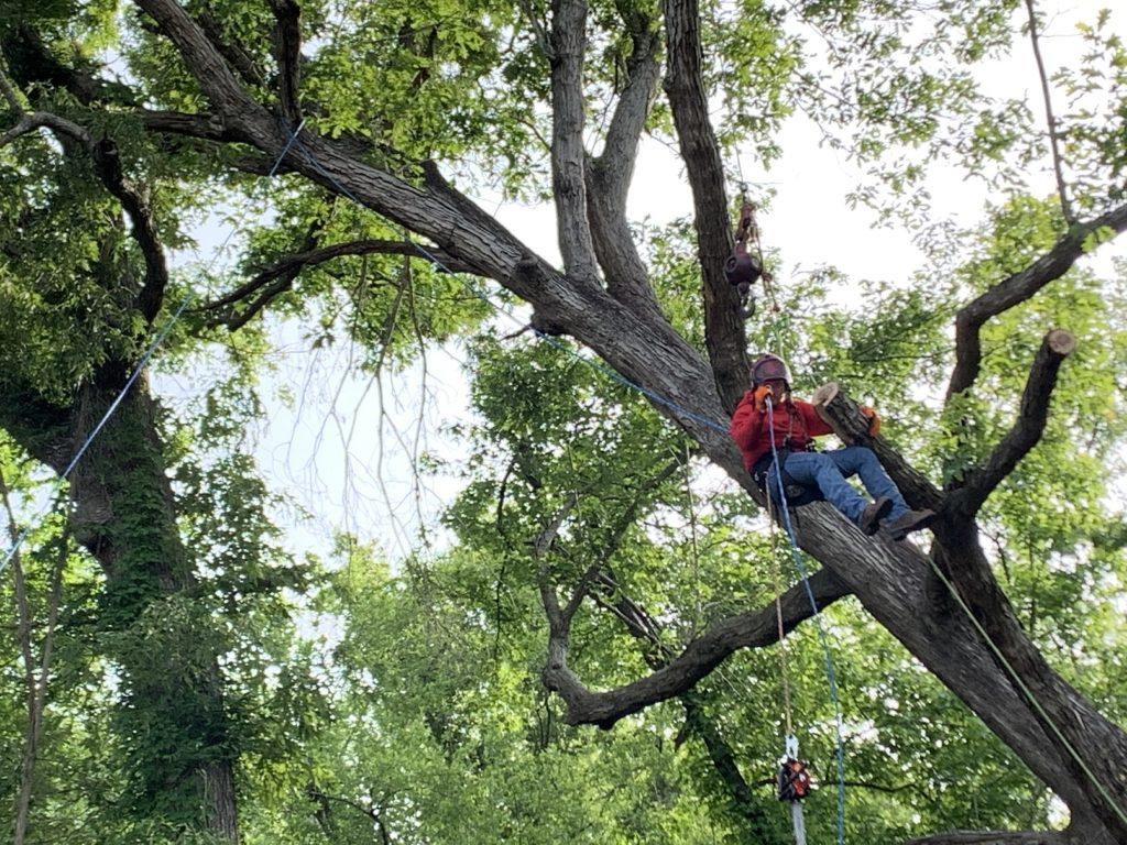 Tree professionals Jacksonville