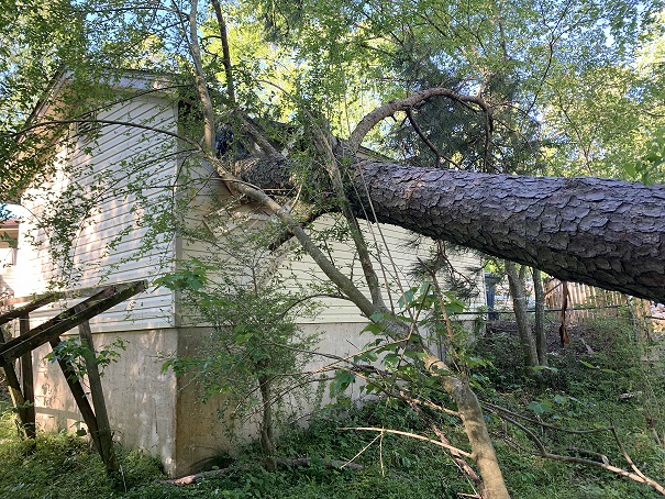 Tree removal service nc